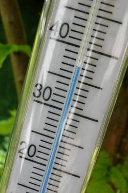 Thermometer und Thermostat im Terrarium