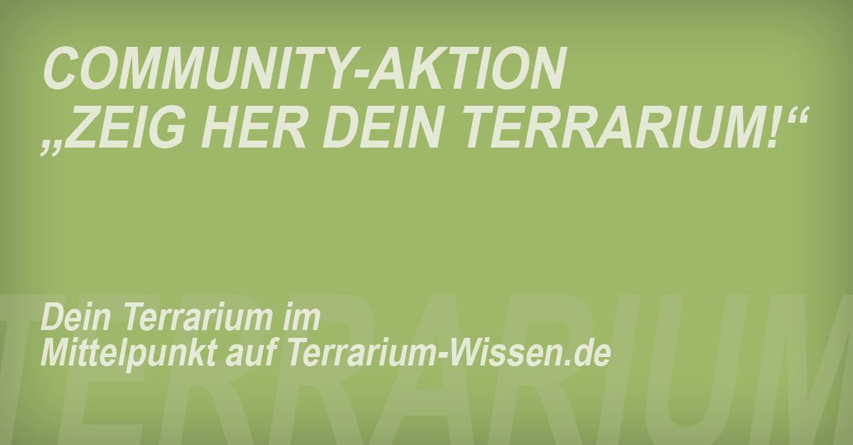 """Community-Aktion: """"Zeig her Dein Terrarium!"""""""