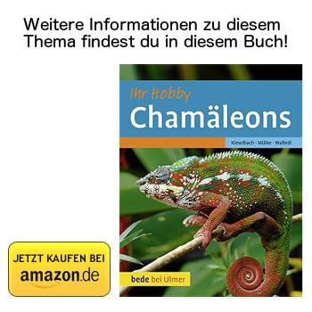 Chamäleons - Buchtipp bei Amazon ansehen.
