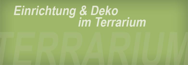 Terrarium-Einrichtung: Von der Pflanze bis zu individuellen Rückwand